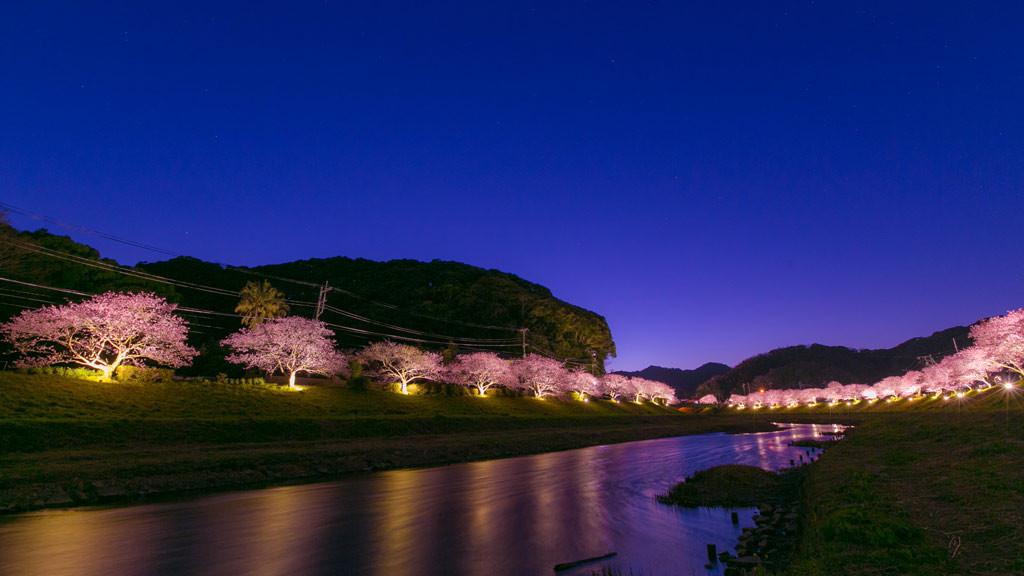 夜桜ライトアップ(みなみの桜まつり)