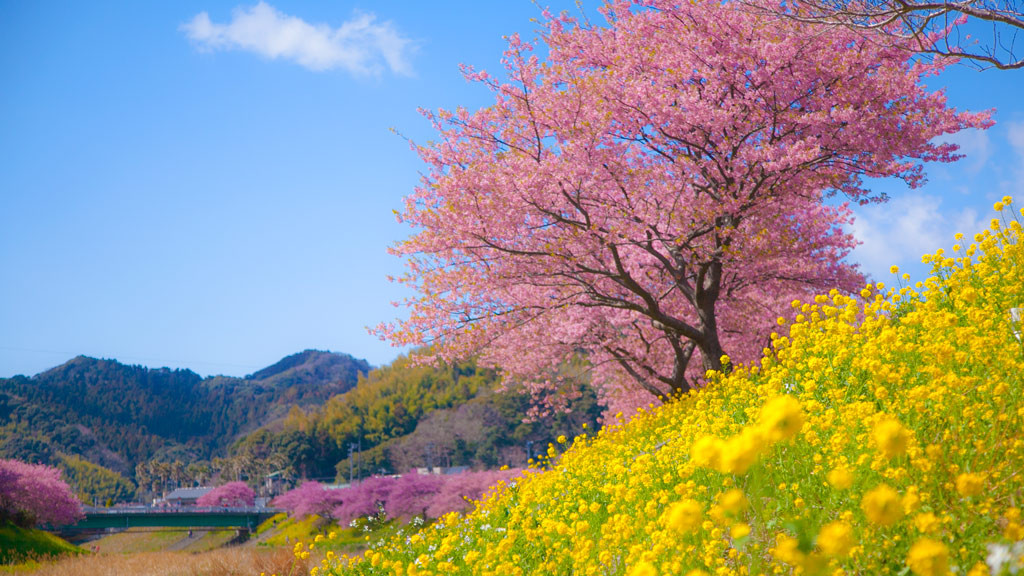 みなみの桜まつり